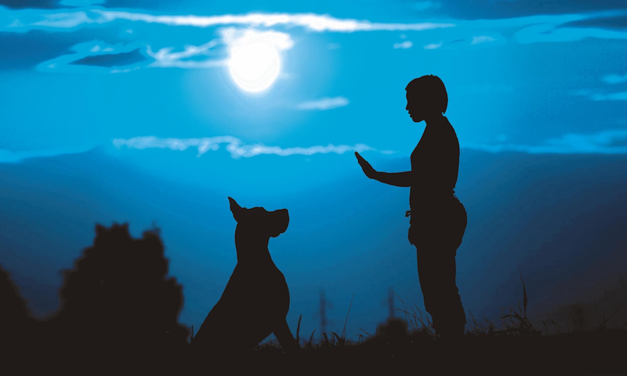 Paramount Dog Training Facebook