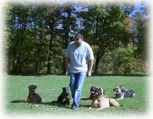 K Dog Training Atlanta